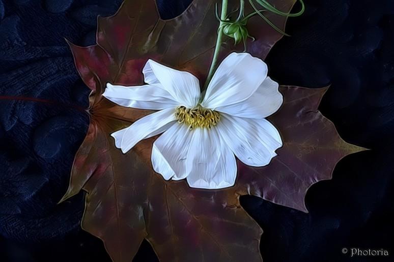 leaf_7