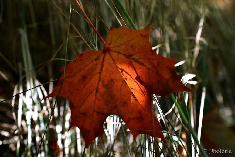 leaf_8a