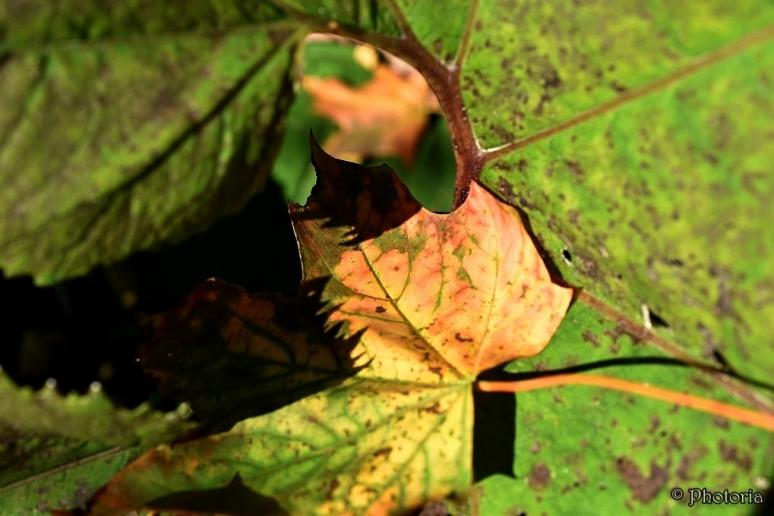 leaf_8b