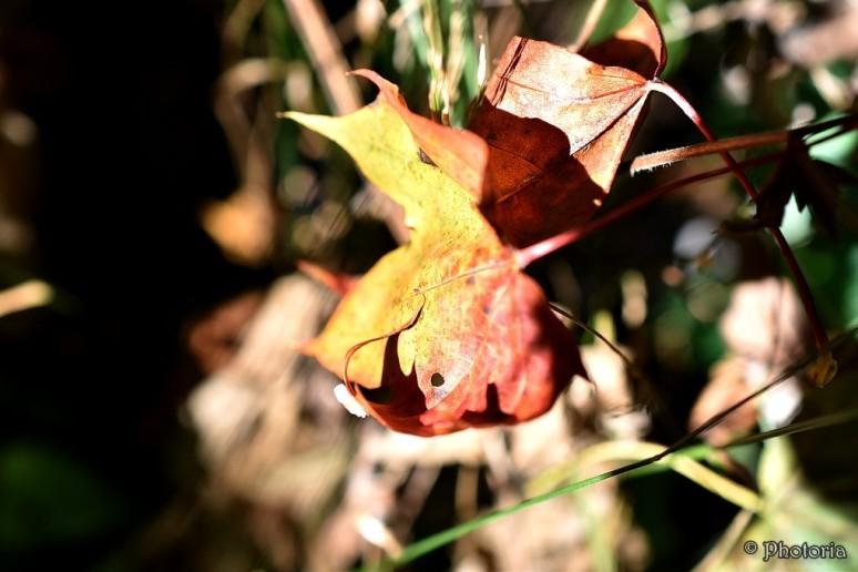 leaf_8c