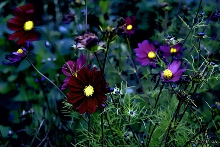 flowers_18c