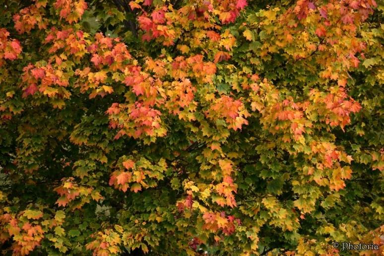 leaf_8d