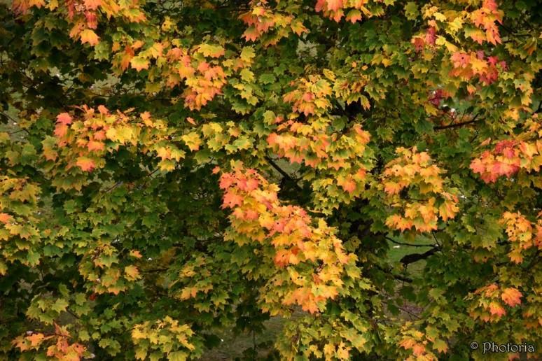 leaf_8e