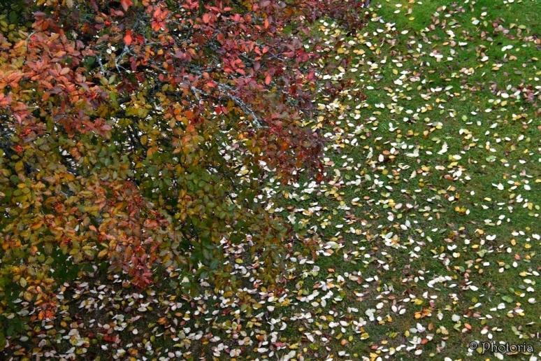 leaf_8f