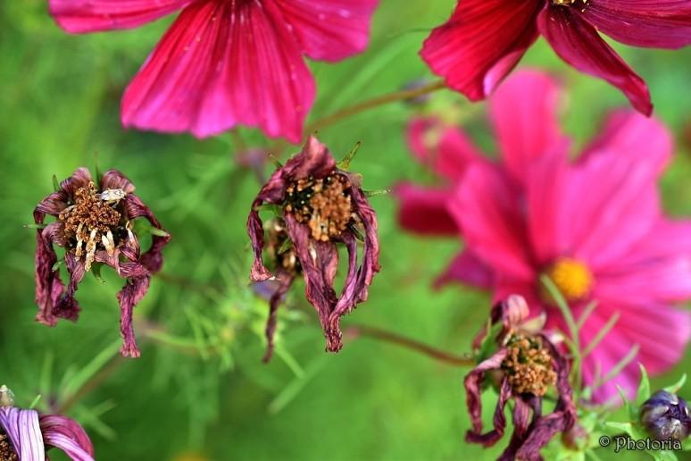 flowers_18d