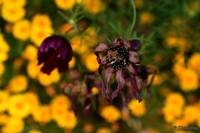 flowers_18e