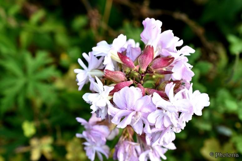 flowers_18h