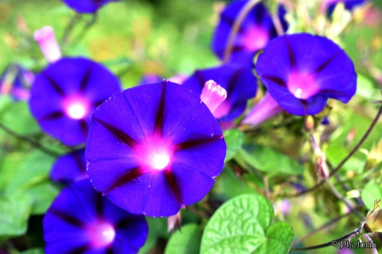 flowers_18j